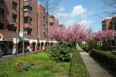 Borsigallee im Frühling